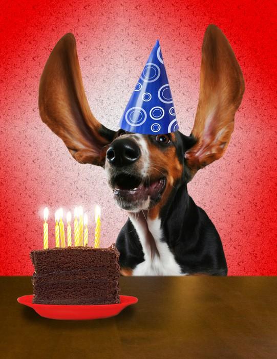 Открытка с днем рождения с животными прикольными 58