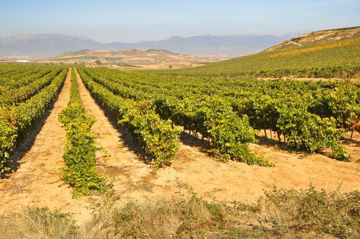 Недвижимость испании виноградники