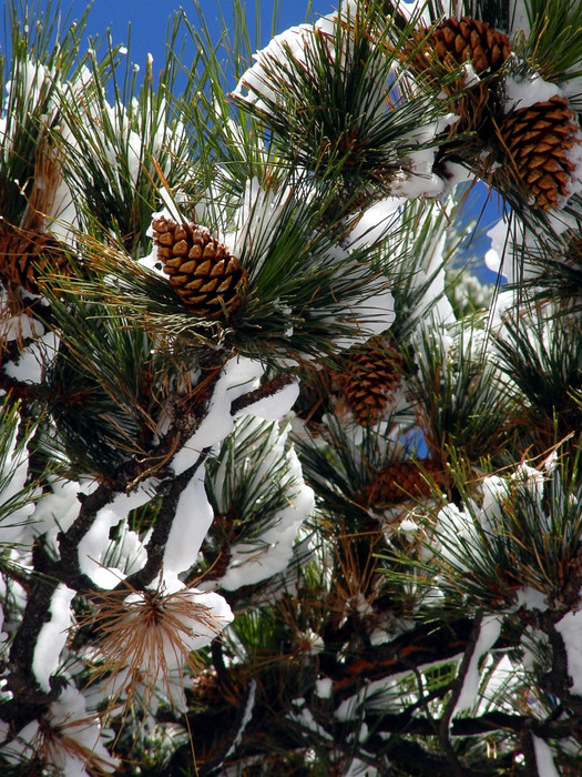 Putting stems on pine cones