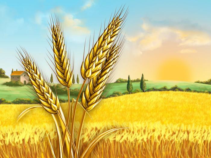 Поле пшеницы рисунок детей