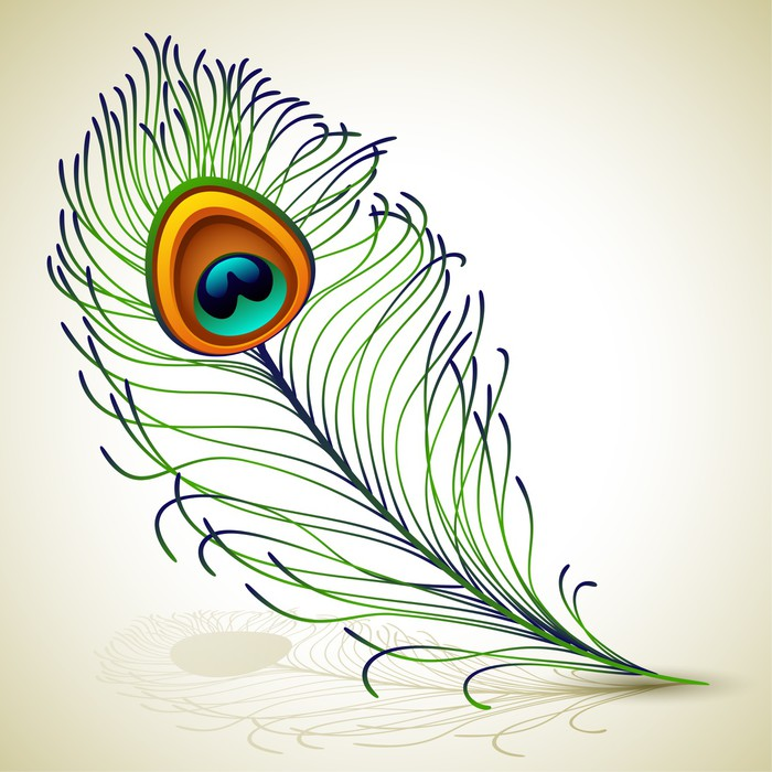 Indian peacock feather drawing