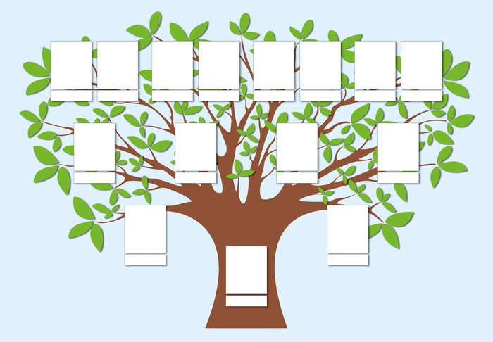 Best 25 Family tree projects ideas on Pinterest  Family