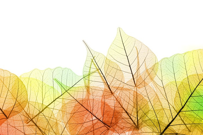 Прозрачные листья