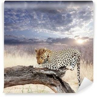 Leopards Wall Murals