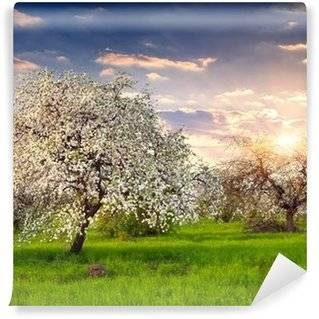 Apple trees Wall Murals
