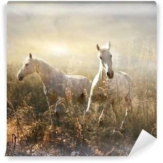 Fototapeten Pferde