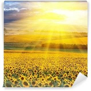 Sunflowers Wall Murals