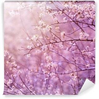 Cherry trees Wall Murals