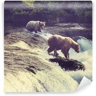 Bears Wall Murals