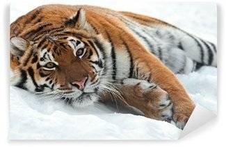 Carte de parati Tigri