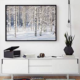 Wall mural - Winter birch forest