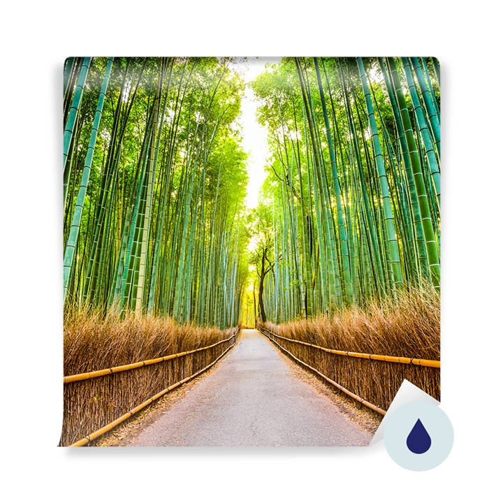 Wall mural - A path in a bamboo grove
