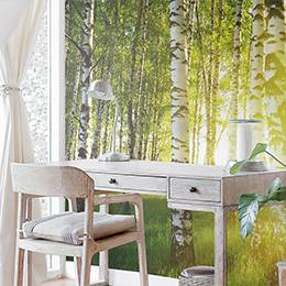 Wall mural - Birches in the rays of the summer sun
