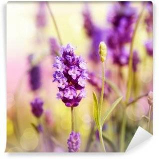Fototapeten Lavendel