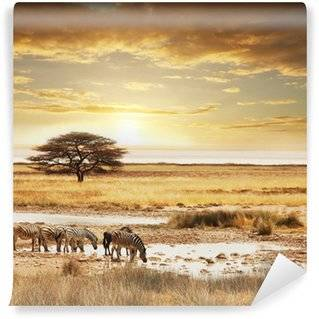 Safari Wall Murals