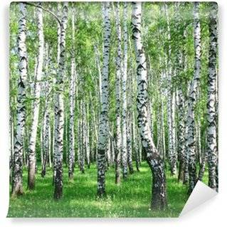 Birches Wall Murals