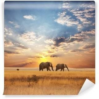 Fototapeter Afrika