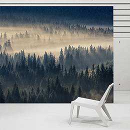 Wall mural - Forest in the fog