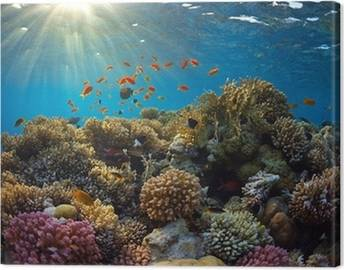 Coral reef Canvas Prints