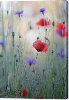 Cornflowers Canvas Prints