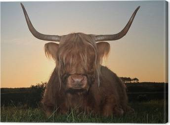 Cows Canvas Prints