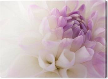 Dahlias Canvas Prints