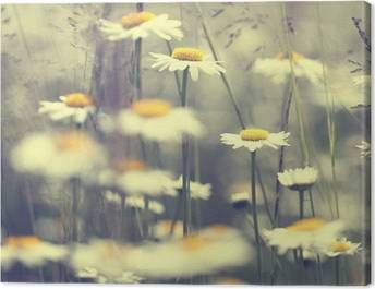 Daisies Canvas Prints