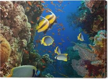 Aquarium Canvas Prints