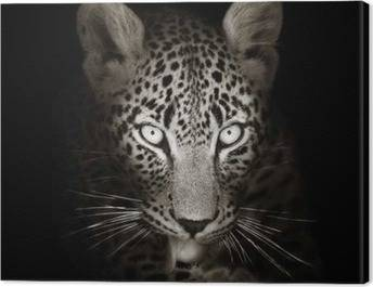 Leopards Canvas Prints