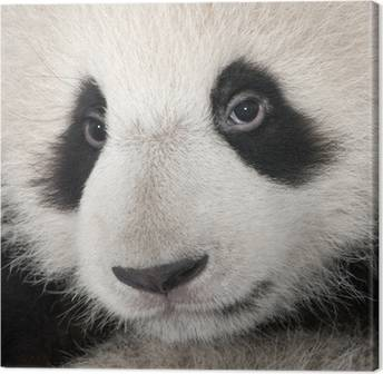 Pandas Canvas Prints