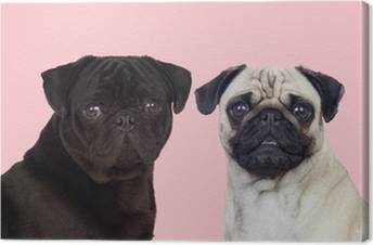 Pugs Canvas Prints