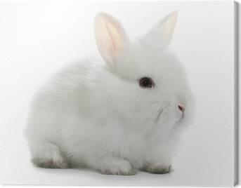 Leinwandbilder Kaninchen
