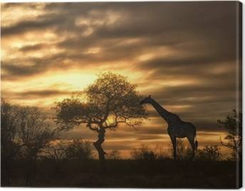 Safari Canvas Prints