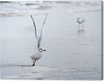 Seagulls Canvas Prints