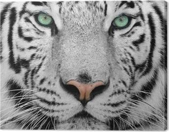 Tableaux sur Toile Tigres