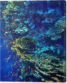 Quadri su Tela Mondo subacqueo