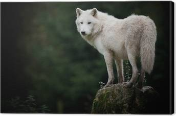 Wolves Canvas Prints