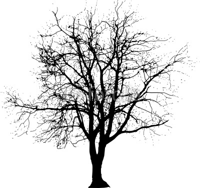 Big Tree One
