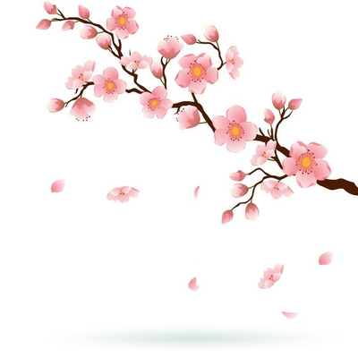 Cherry blossom with falling petals.