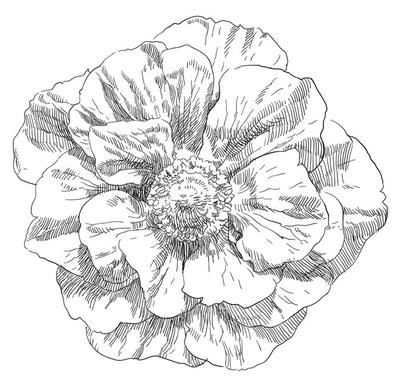 Kwiat kwiat rysunek ręka