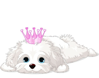 Havanese Puppy with crown