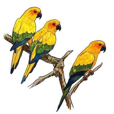 Three parrots holding at the branch