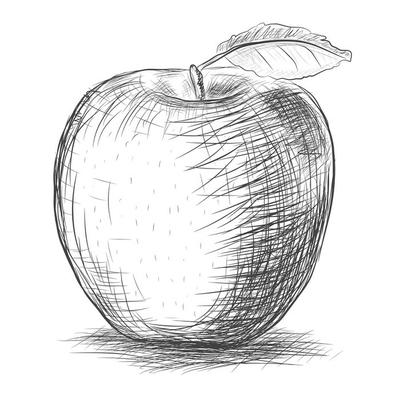 sketch   apple