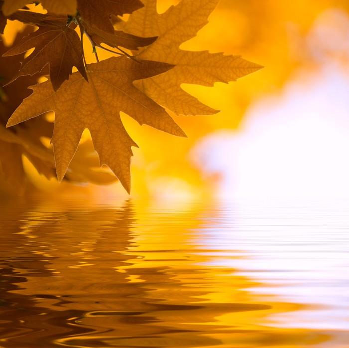 Vinylová Tapeta Podzimní listí, velmi mělké zaměřením - Roční období