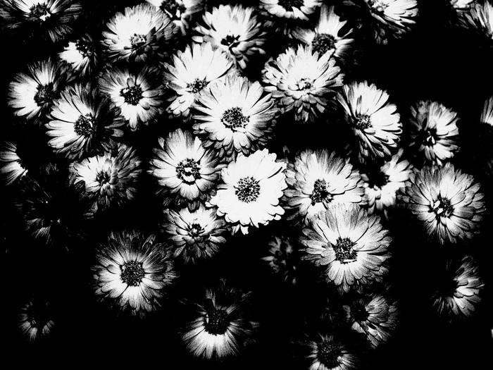 tableau sur toile fleurs noir et blanc pixers nous vivons pour changer. Black Bedroom Furniture Sets. Home Design Ideas