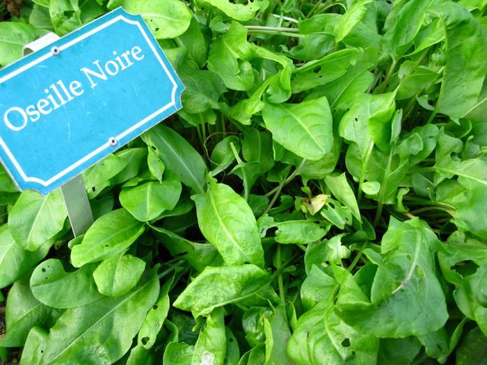 Vinylová Tapeta Oseille noire - Domov a zahrada