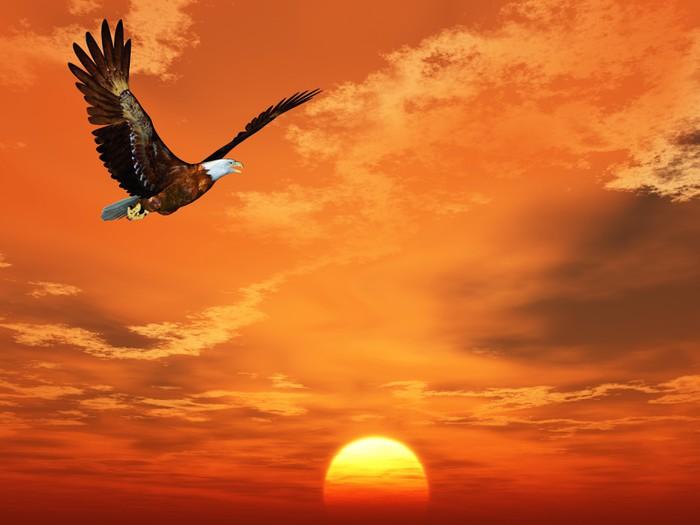 Vinylová Tapeta Eagle létání na pozadí západu slunce na obloze - Témata