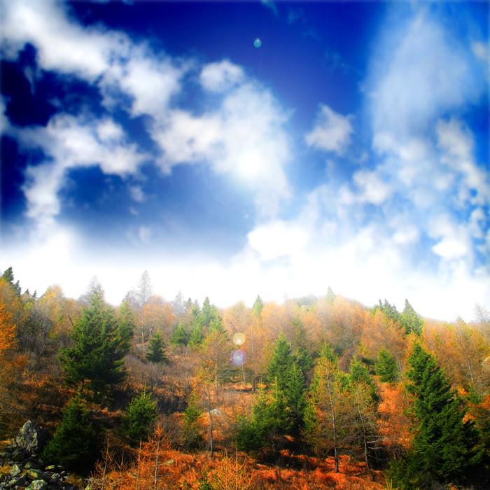 Vinylová Tapeta Krajiny dřevo s zatažené obloze - Roční období