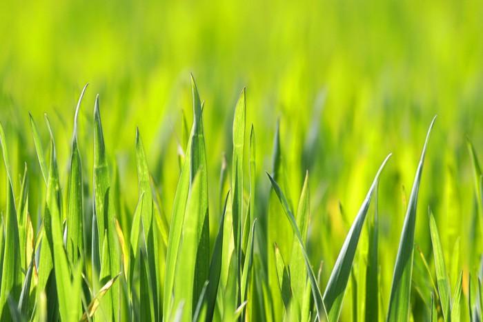 Vinylová Tapeta Přírodní trávy osvětlena sluncem - Město