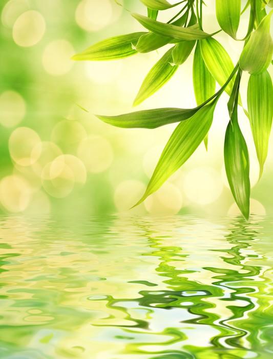sticker feuilles de bambou rendu refl te dans l 39 eau pixers nous vivons pour changer. Black Bedroom Furniture Sets. Home Design Ideas
